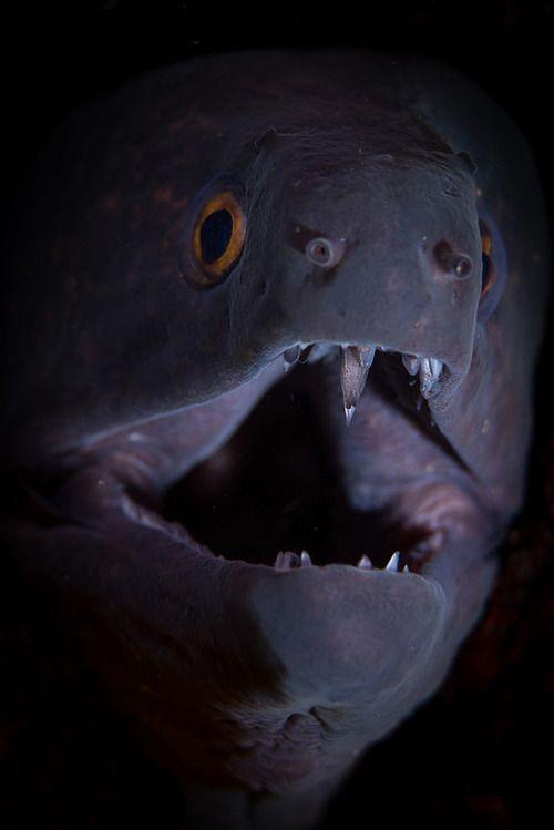 Morray Eel -  Macro by Oktay Calisir