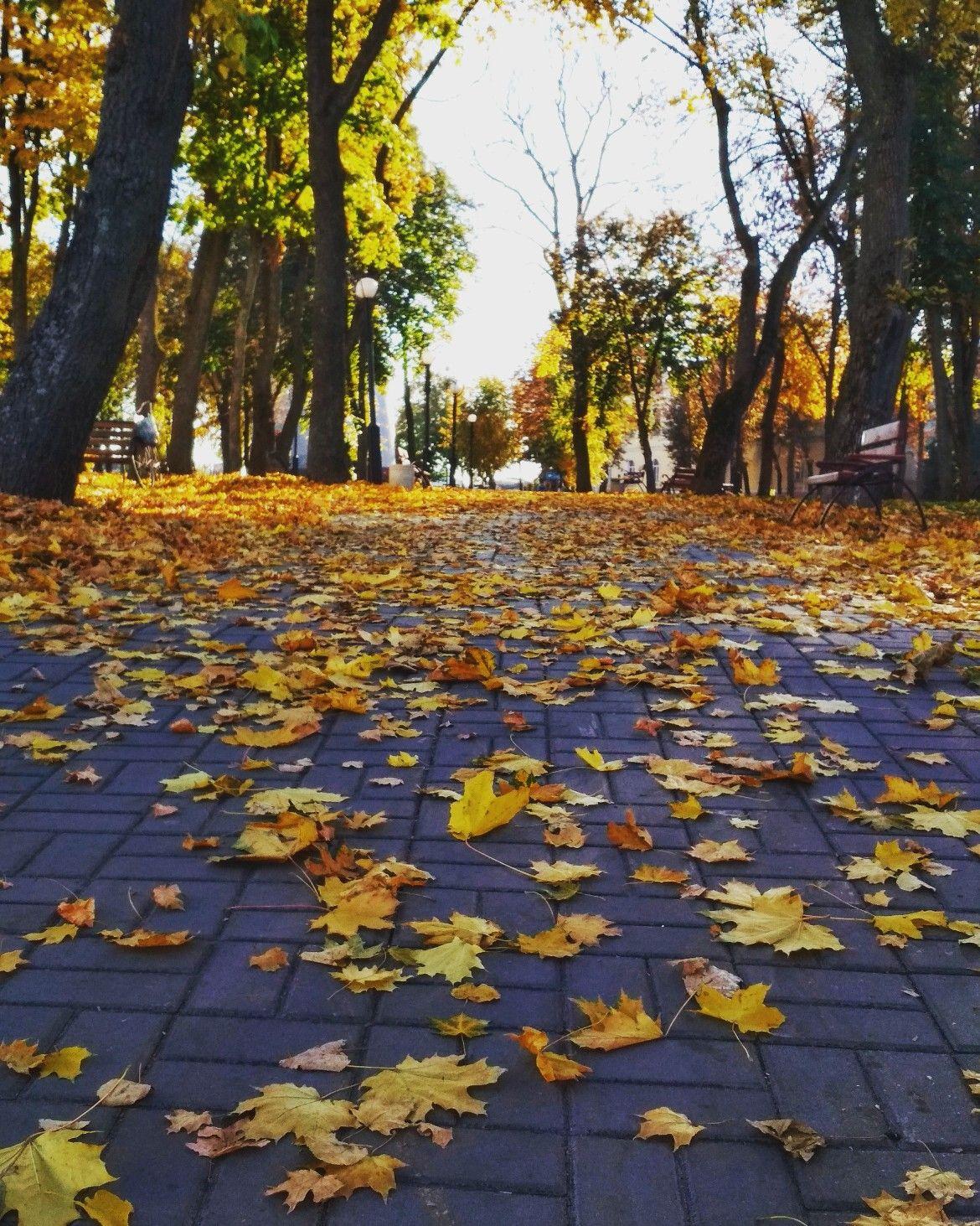 Осень в городе. Парк   Осенние фотографии, Инстаграм ...