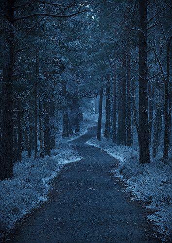 Dark Forest | Flickr - Photo Sharing!                                                                                                                                                      More