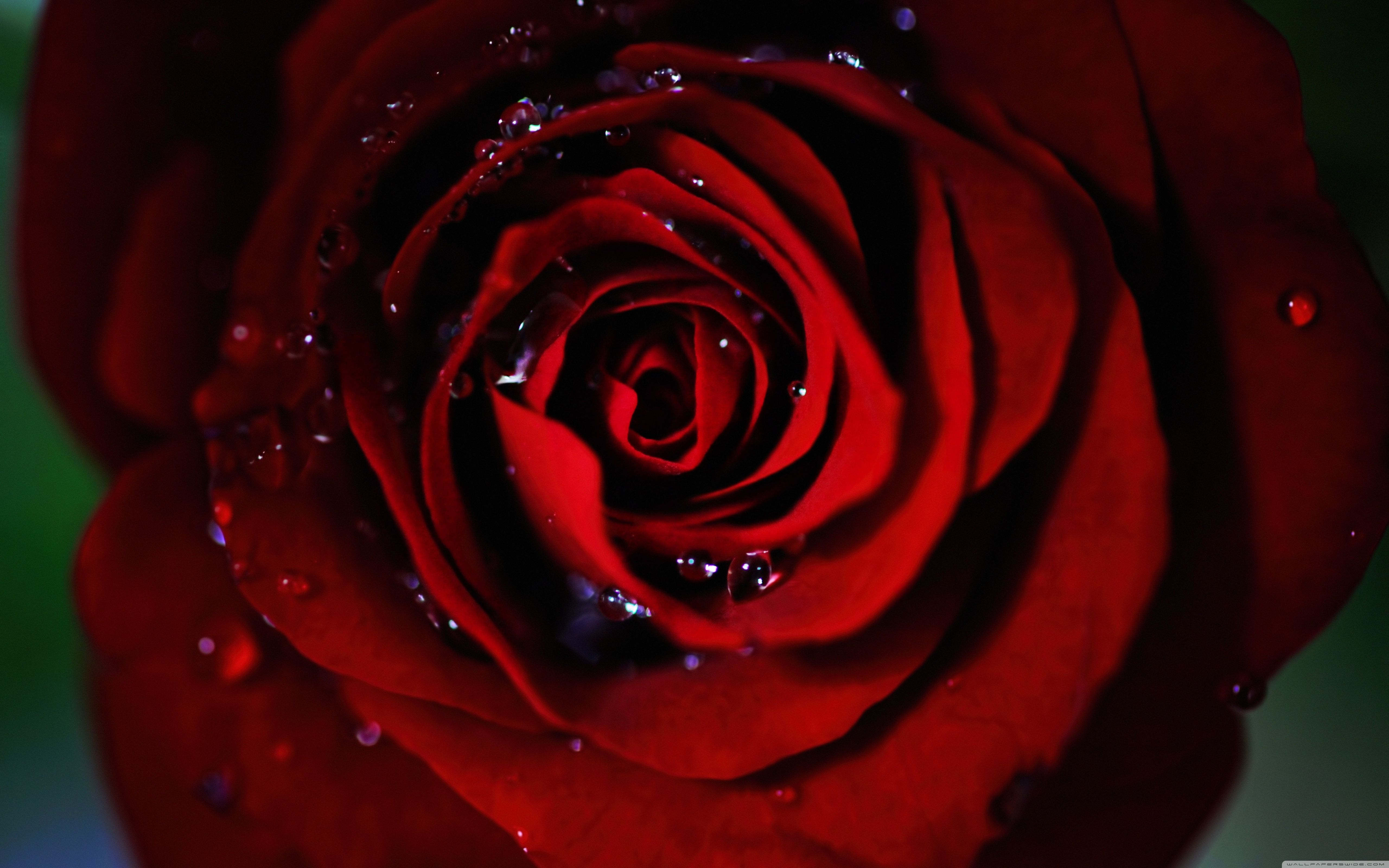 All Red Wallpaper Group 50 Hd Wallpapers Red Roses Wallpaper Red Wallpaper Dark Red Wallpaper