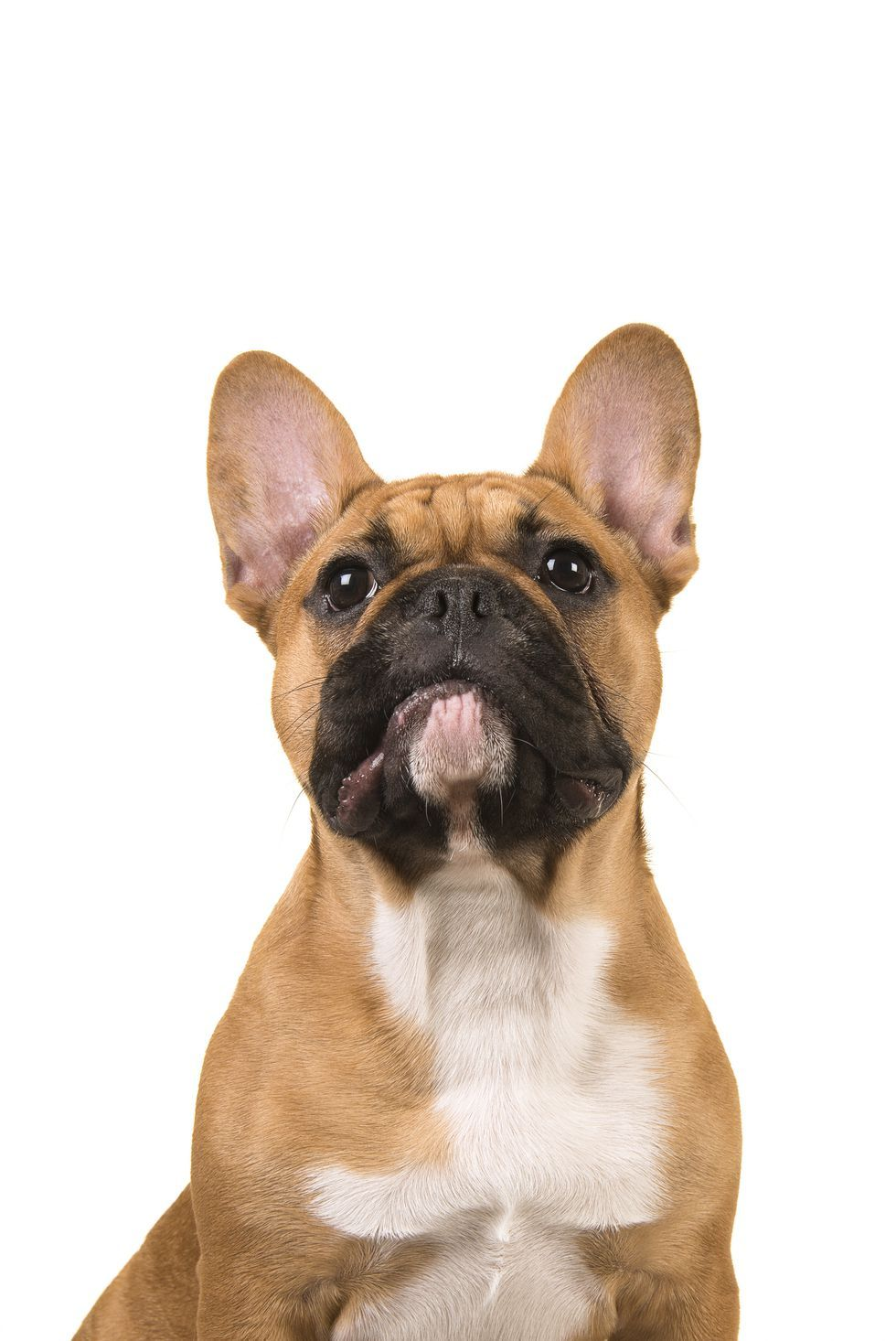 20 Funny Dog Names For Your Playful Pup Funny Dog Names Dog