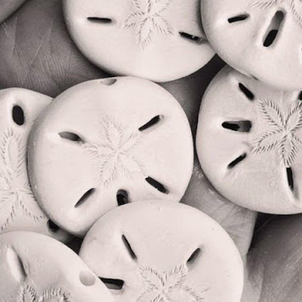Carving in porcelain sand dollars sand dollar carving