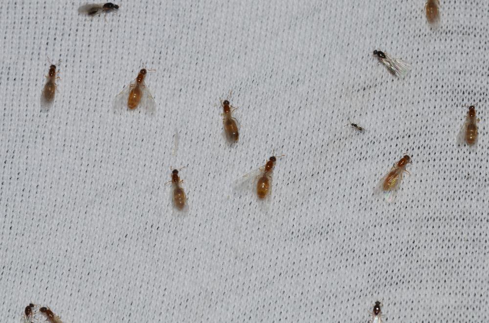 a847455eac2347248f020d92d39f8d3f - How To Get Rid Of Tiny Ants In Bathroom