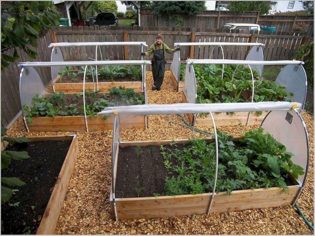 7 Fabulous Ideas Vegetable Garden Terrace Spaces Summer Vegetable Garden Enclosed Veg Garden Layout Vegetable Backyard Vegetable Gardens Home Vegetable Garden