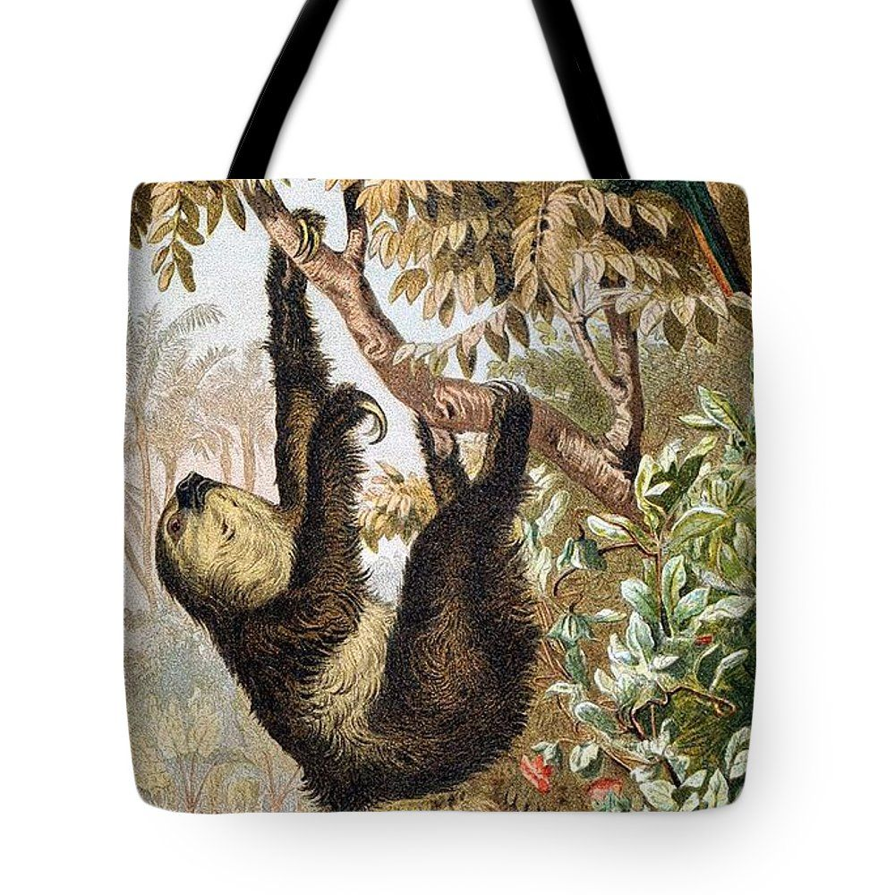 Hoffmanns Two Toed Sloth Tote Bag featuring the painting Two-toed Sloth by Otis Porritt