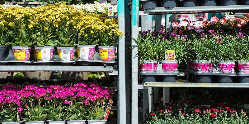 Why You Should Only Buy Your Plants at Home Depot Plants