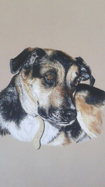 Cayenne, chien croisé Berger pastels secs