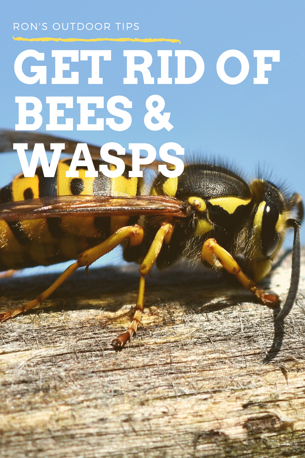 Get Rid Of Bees Wasps In 2020 Getting Rid Of Bees Bees And Wasps Get Rid Of Wasps
