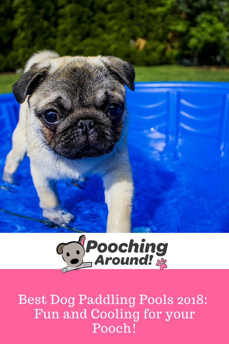 Best Dog Paddling Pools 2018 Fun And Cooling For Your Pooch Poochingaround Pooch Paddlingpools Dogpool Best Dogs