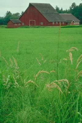 Hobby Farm Tax Deductions Sapling Backyard Farming Homestead Farm Farm Business