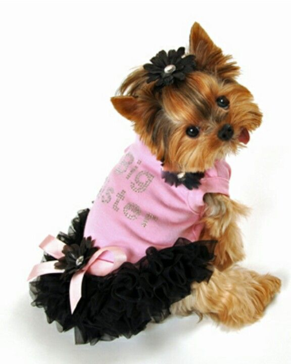 #yorkie #yorkie clothing | Doggy Clothes | Pinterest ...