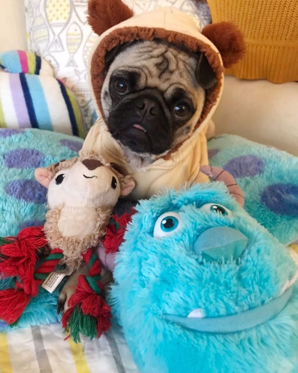 Pin By Natalie Stark On Pugs In 2020 Baby Animals Super Cute