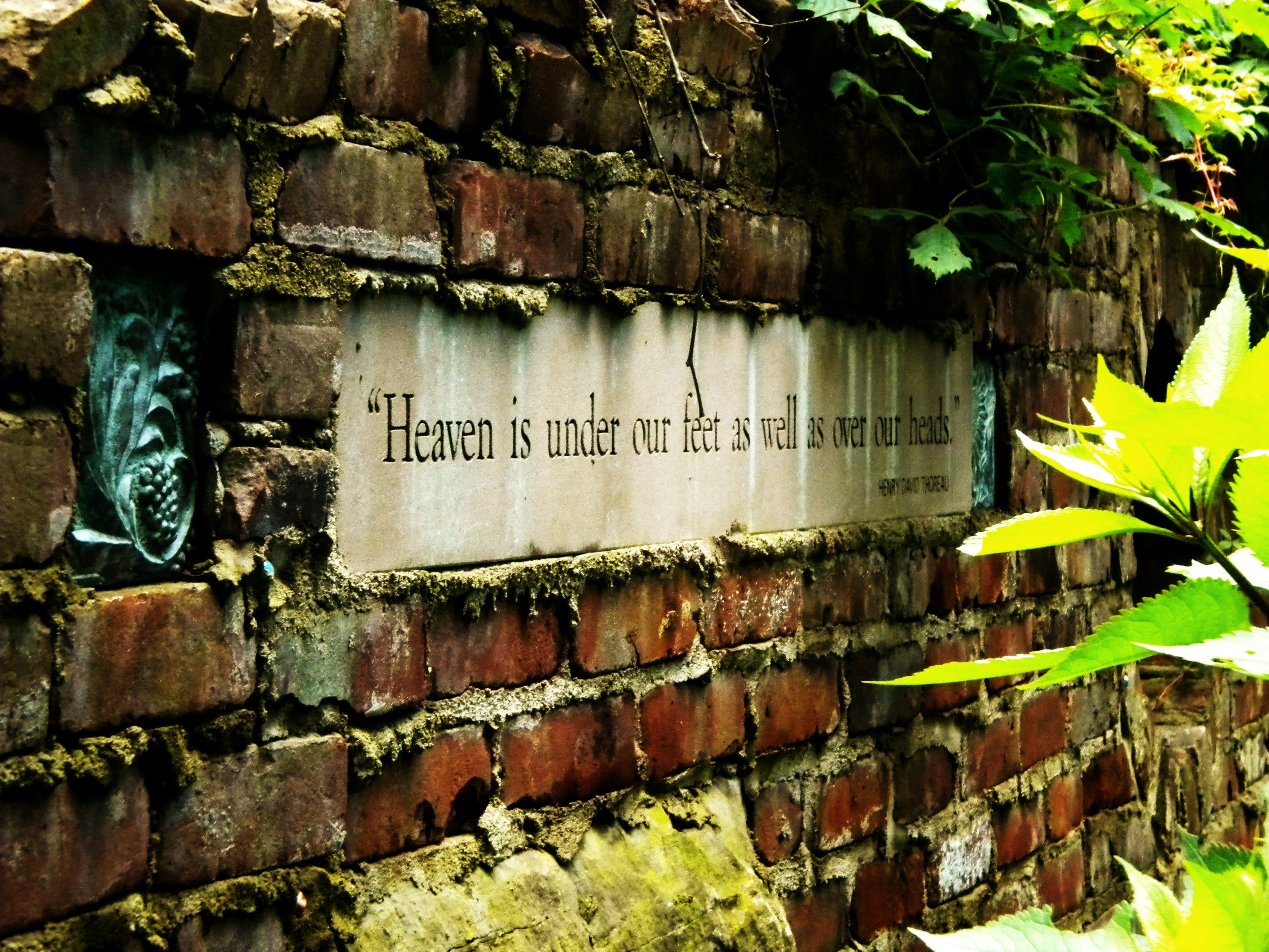garden quote More gardening quotes to inspire: http://www.tomatodirt ...