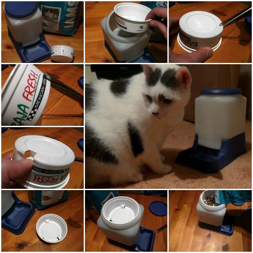 Diy Cat Powered Automatic Cat Feeder Pet Habitats