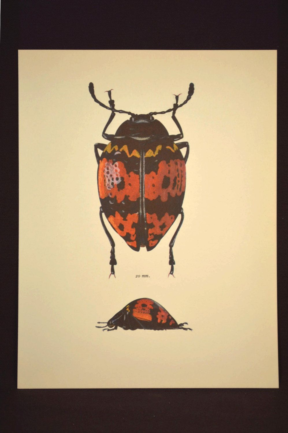 Insect Wall Art Beetle Print Decor Bug Art Nature Vintage | Decor ...
