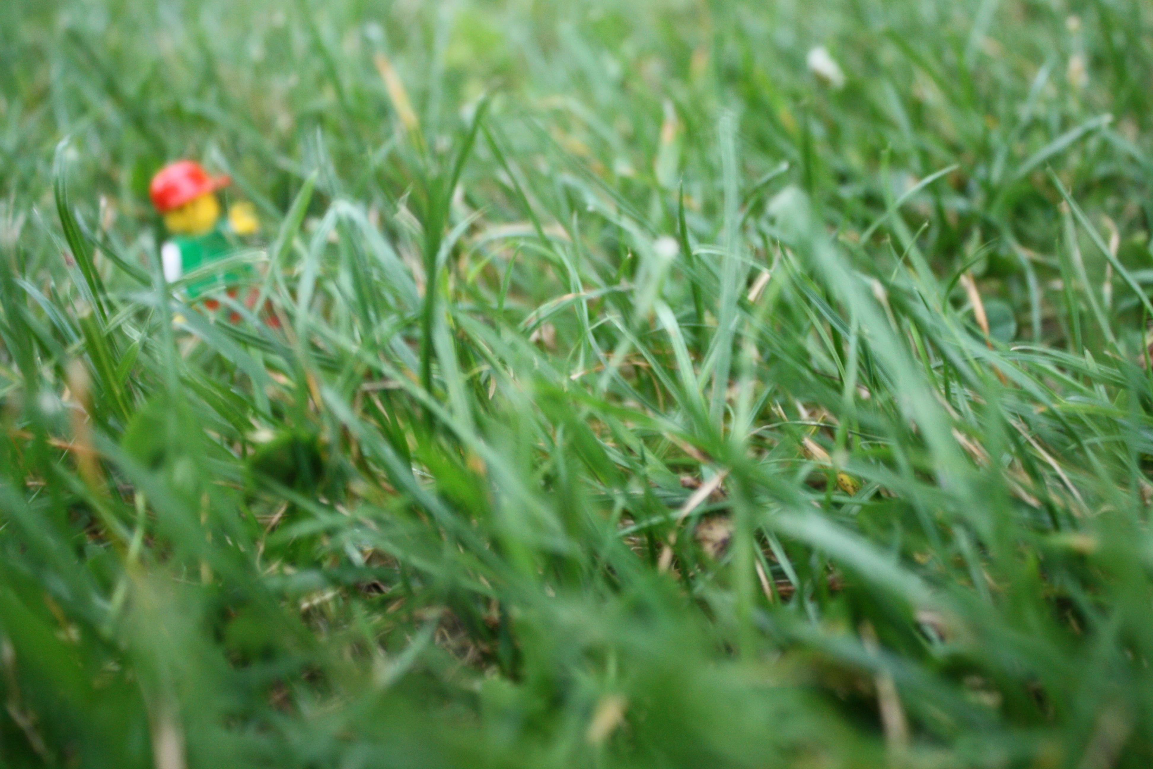 Grass Is An Example Of An Autotroph Because It Uses Sunlight To