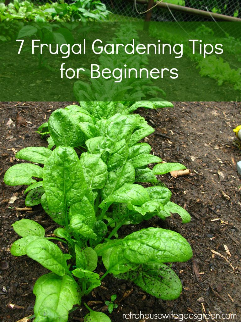7 Frugal Gardening Tips For Beginners Growing Vegetables 400 x 300