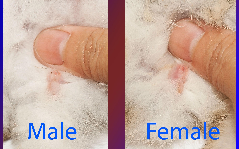 Female vagina and male penis-6128