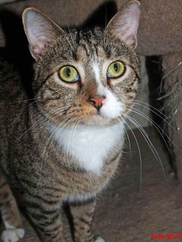 Shane was born in 2008.  He is a sweet sensitive and playful boy.  Very cute but  a bit shy at first.  He would be best in a home with no dogs or small children..   Please email us for additional information on...