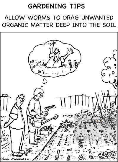 Allotment cartoons, Allotment cartoon, funny, Allotment