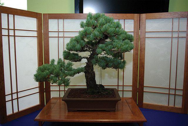 Missouri Trees Make Bonsai