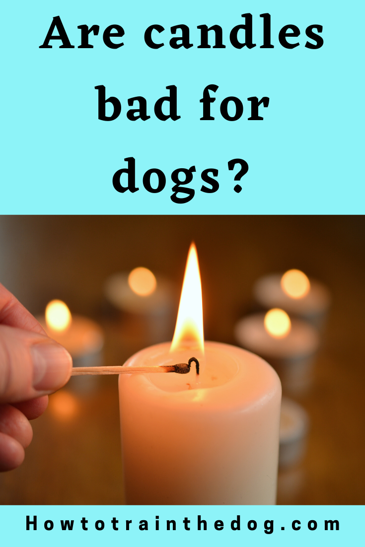 Are Candles Bad For Dogs Scented Candles Aromatherapy Scented Candles Candles