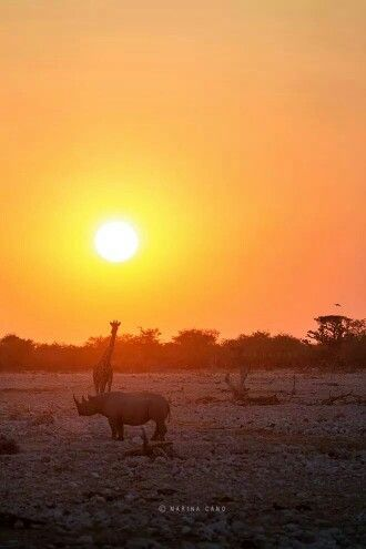 Africa at its best ...