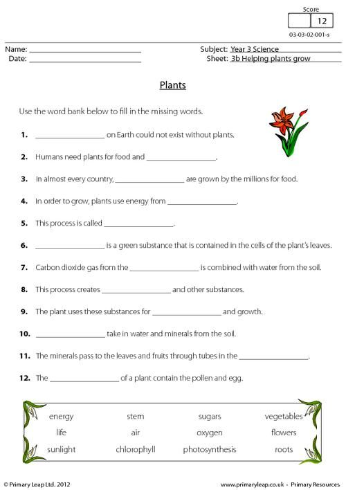 plants worksheet plants science lessons science worksheets teaching. Black Bedroom Furniture Sets. Home Design Ideas