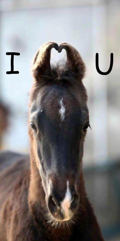 Cute horse ears make love heart