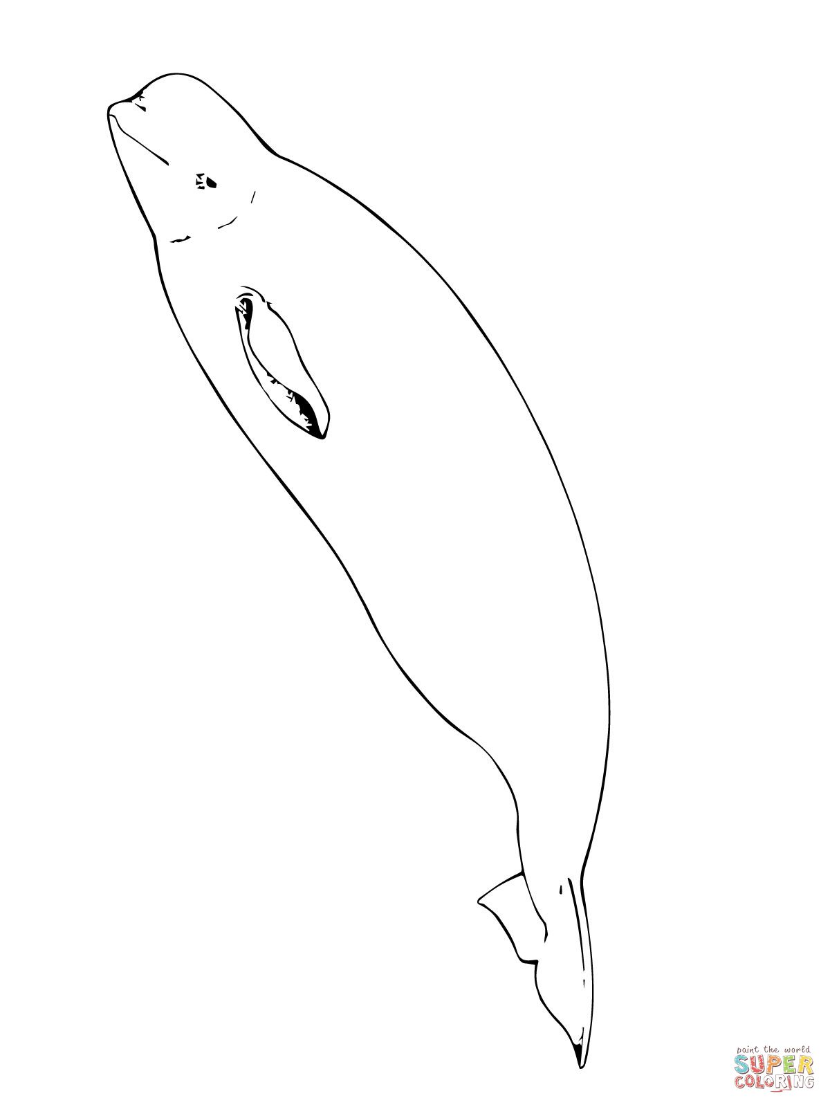 Beluga Whale Coloring Page Jpg 1200 1600 Whale Coloring Pages Coloring Pages Animal Coloring Pages