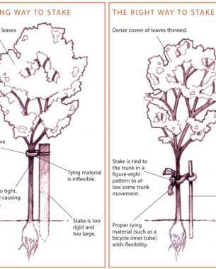 To Stake Or Not To Stake Fine Gardening Garden Animals