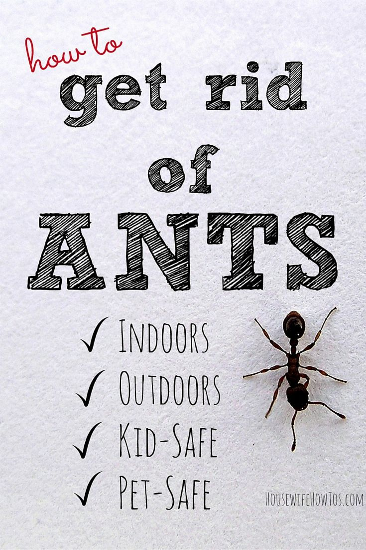 Once you\'ve seen one ant in your home you\'re bound to see more ...
