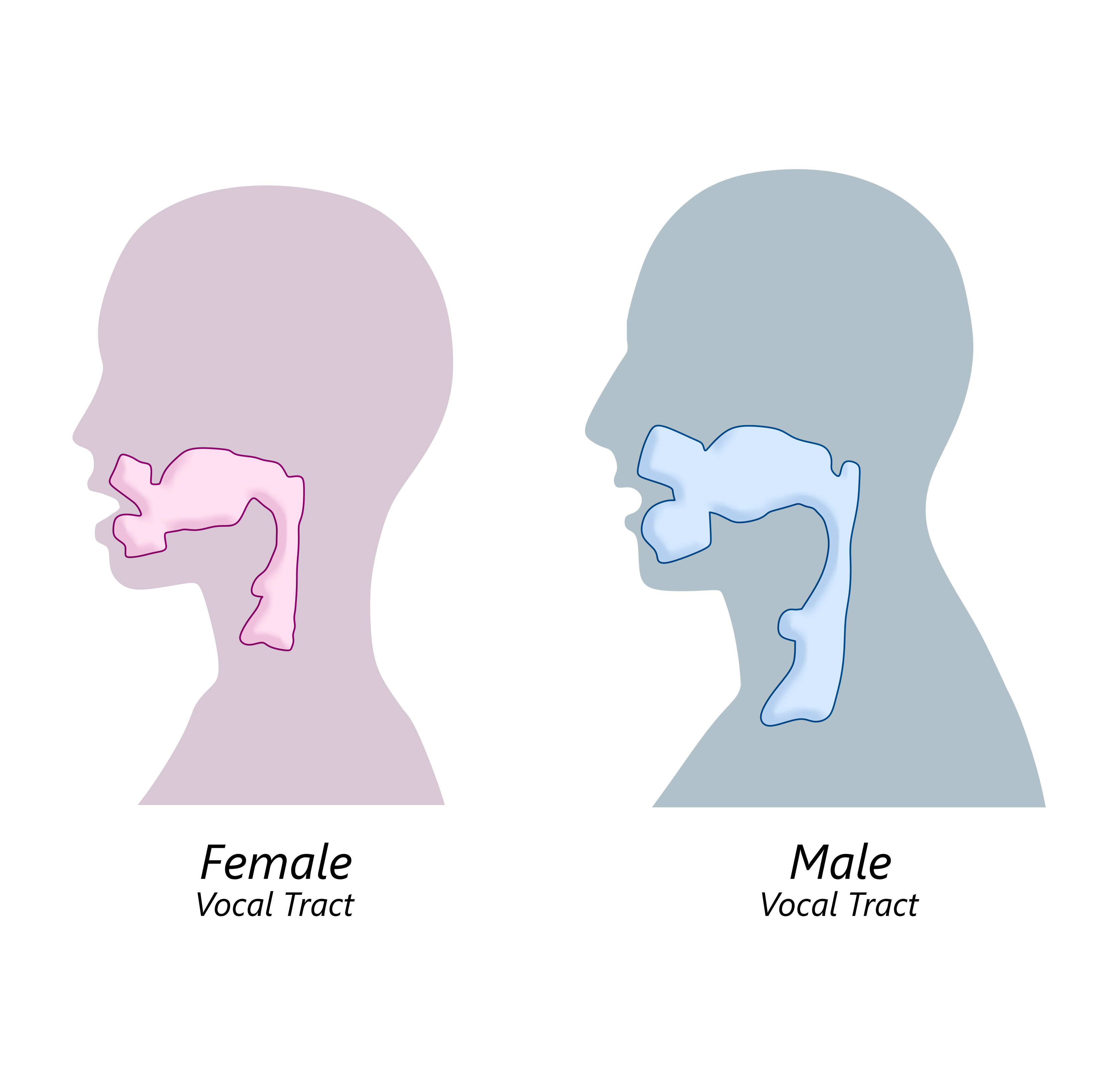 The Female Vocal Tract vs The Male Vocal Tract