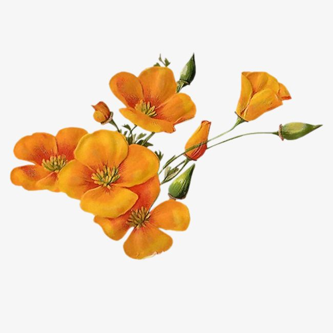 Yellow Flowers Vector Plant Flowers Park Png And Psd Flower Aesthetic Plant Aesthetic Vector Flowers