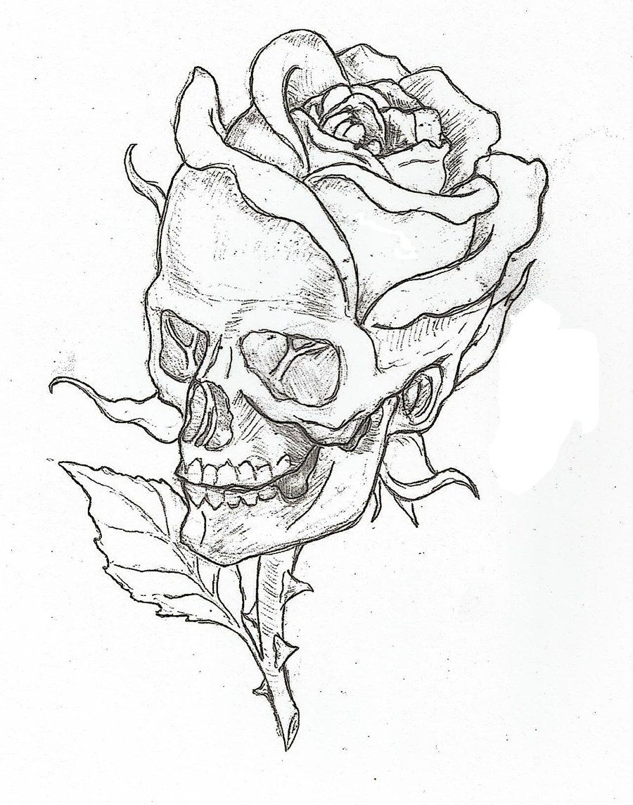 Skull Rose By Epickickboxer D5o0axr Jpg 900 1144 Skull Art Roses Drawing Art Drawings Sketches