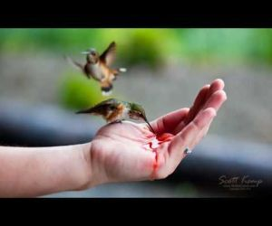 a84e839453dc2842708afc729e4e951b - How To Get A Hummingbird To Land On Your Finger