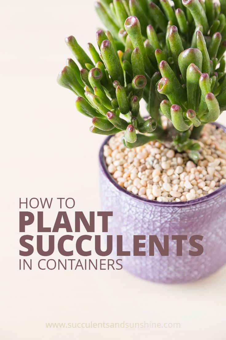 How to Plant Succulents   Succulents and Sunshine