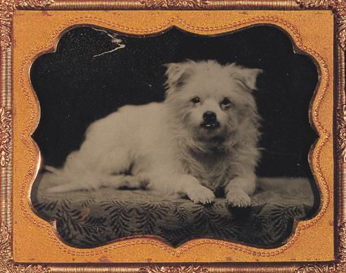 George Eastman House White Dogs Dog Photograph Dogs