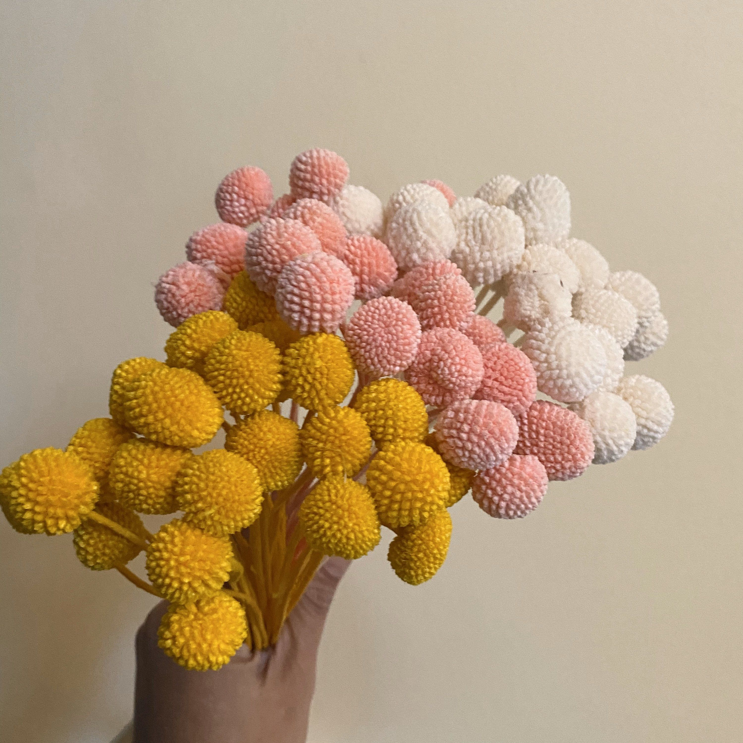 Billy balls 20 stems yellow white pink dried billy etsy
