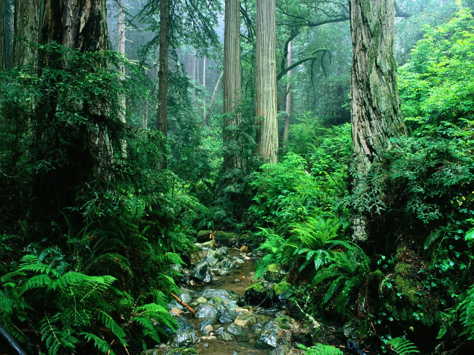South America Amazon World S Largest Tropical Rainforest And