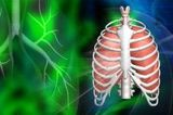 28+ What Are the Various Organ Systems Contained Within the Human Body