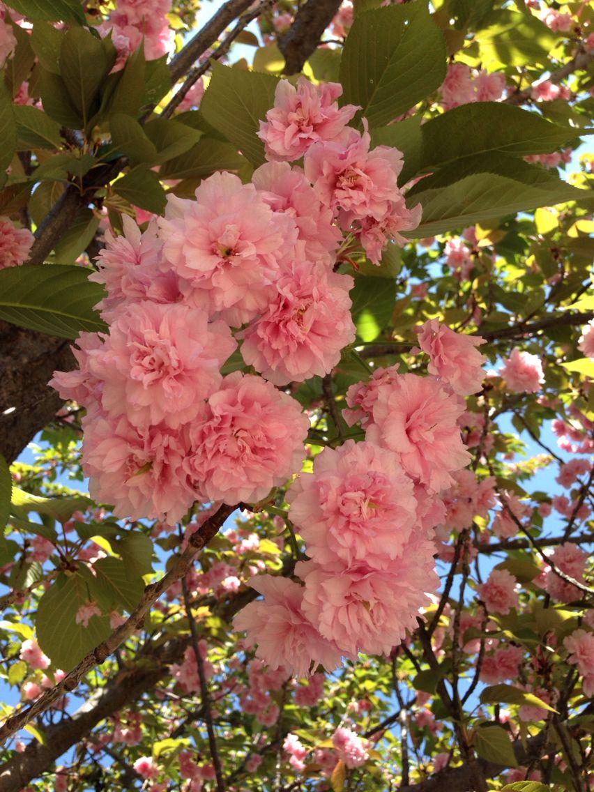 Inside The Carnation Tree Original And Unedited Belas Flores Jardinagem Flores