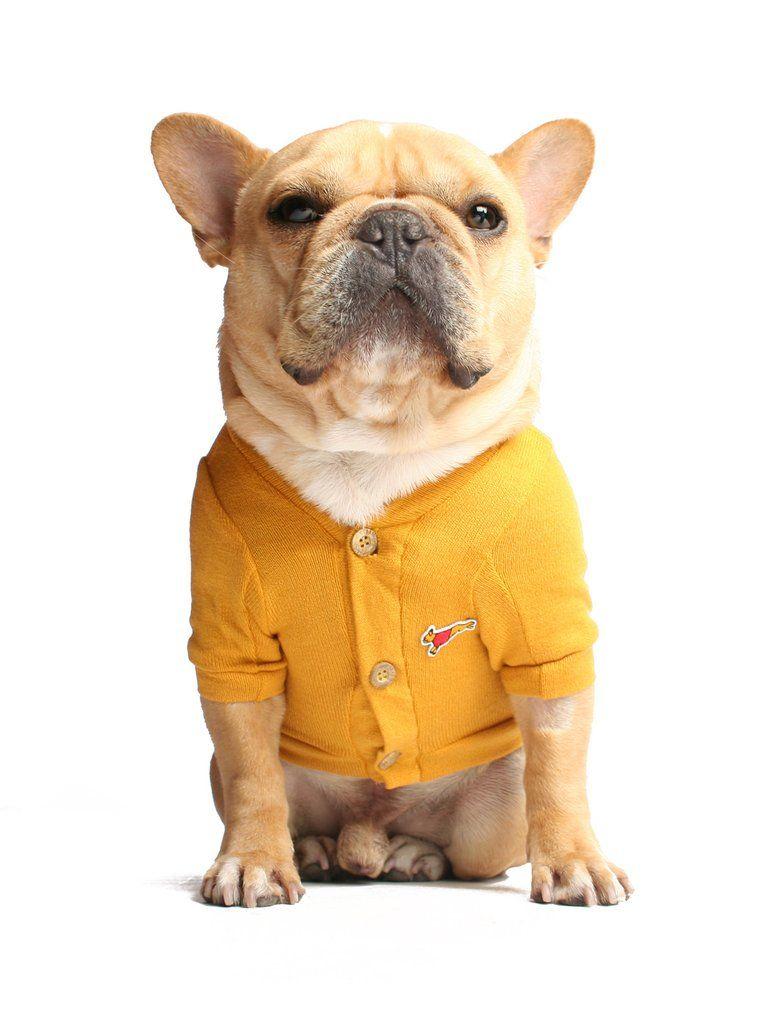 The Quincy Cardigan Franzosische Bulldogge Bulldogge Und Franzosisch