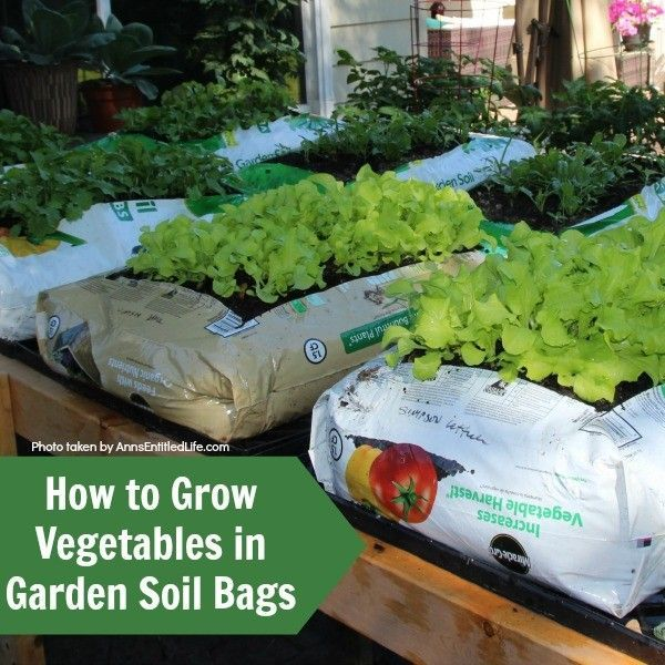 to Grow Vegetables in Garden Soil Bags. Learn how to grow vegetables in soil bags eliminating the need for garden planters or in-ground planting. Grow your vegetables from seed, and have fresh vegetables all summer long with very little gardening work!
