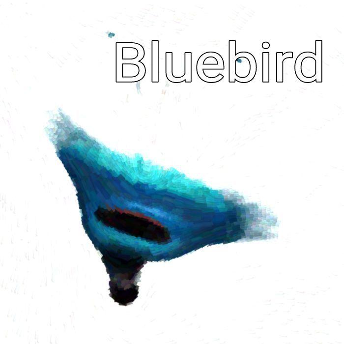Bluebird of Paradise Brush