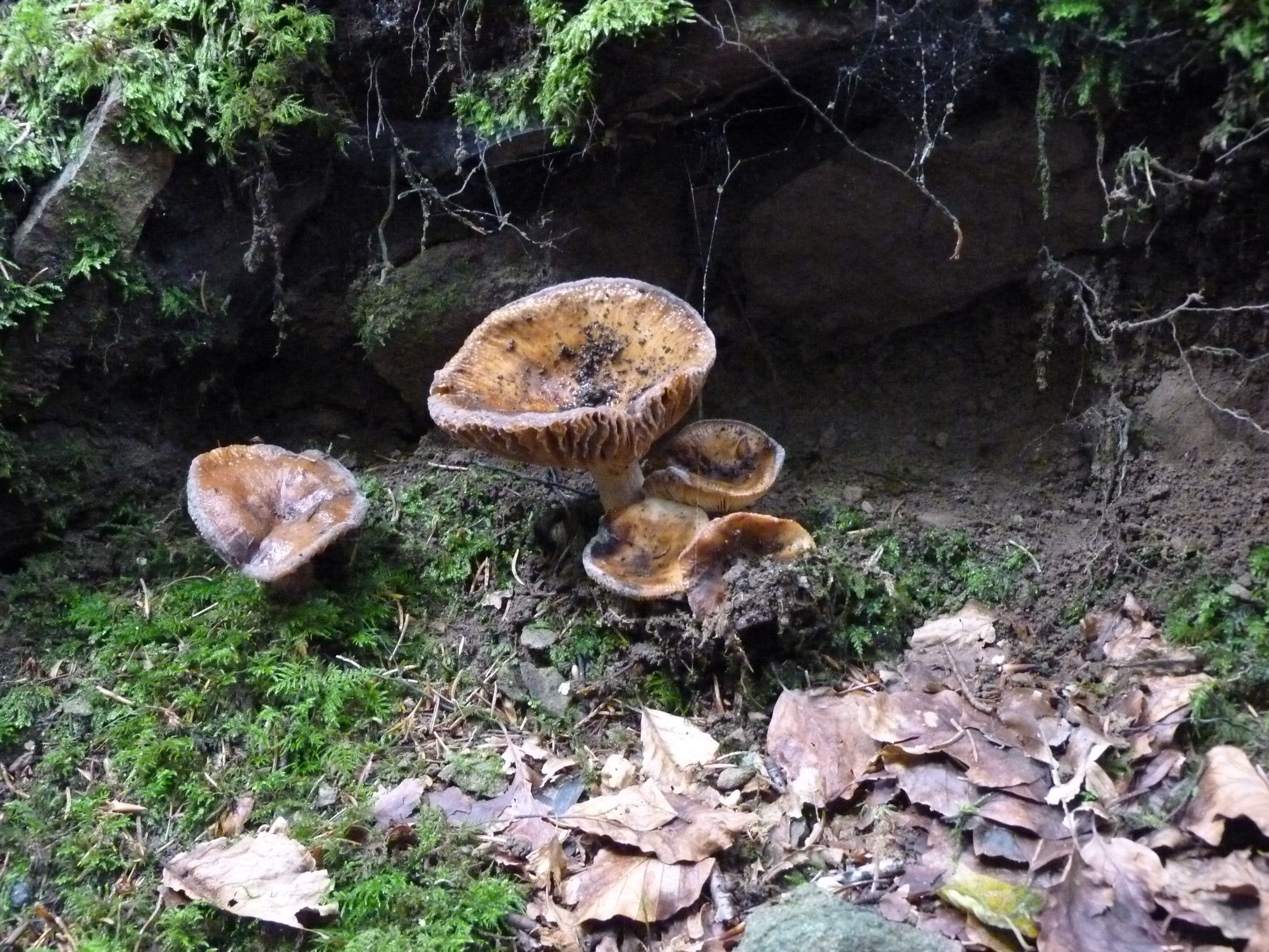 Mushrooms in Autumn. Beecraigs Country Park