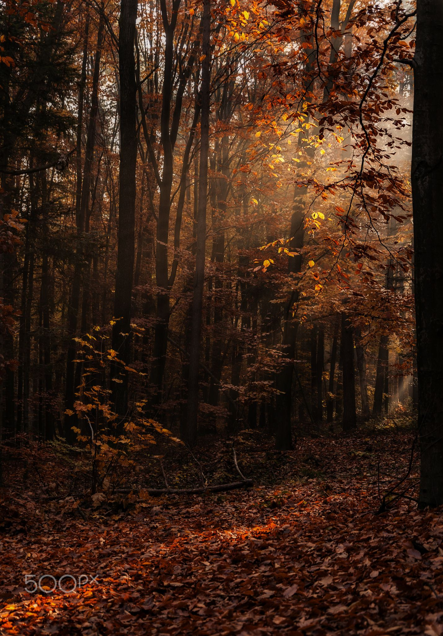 Autumn song by Katarzyna Soluch on 500px