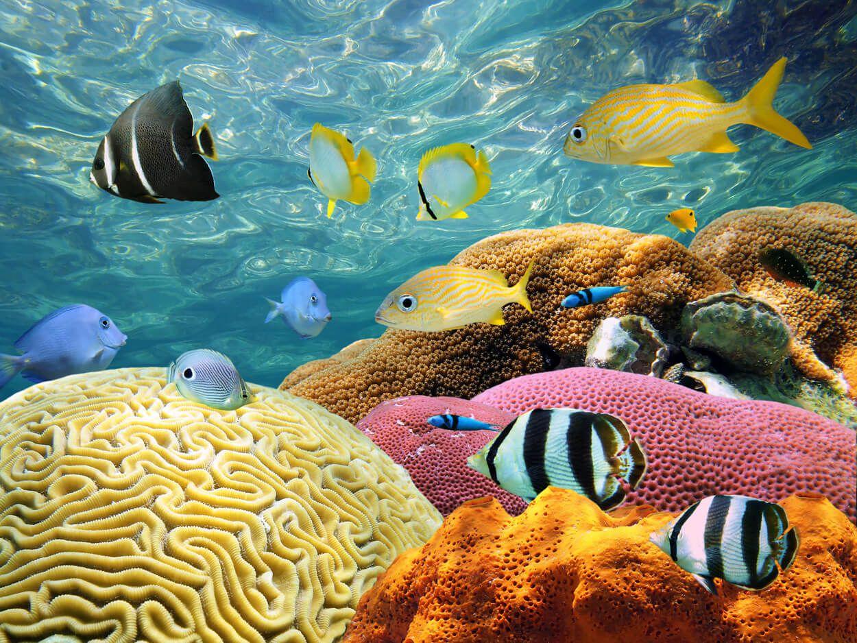 Картинки раскраски животный мир морей и океанов мире существует