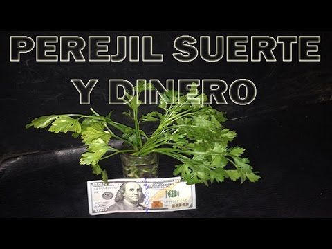 Suerte Con Perejil Baños Y Rituales Para El Dinero Y Alejar Malas Energias De Tu Hogar Y Negocio Youtube Youtube Herbs Plants