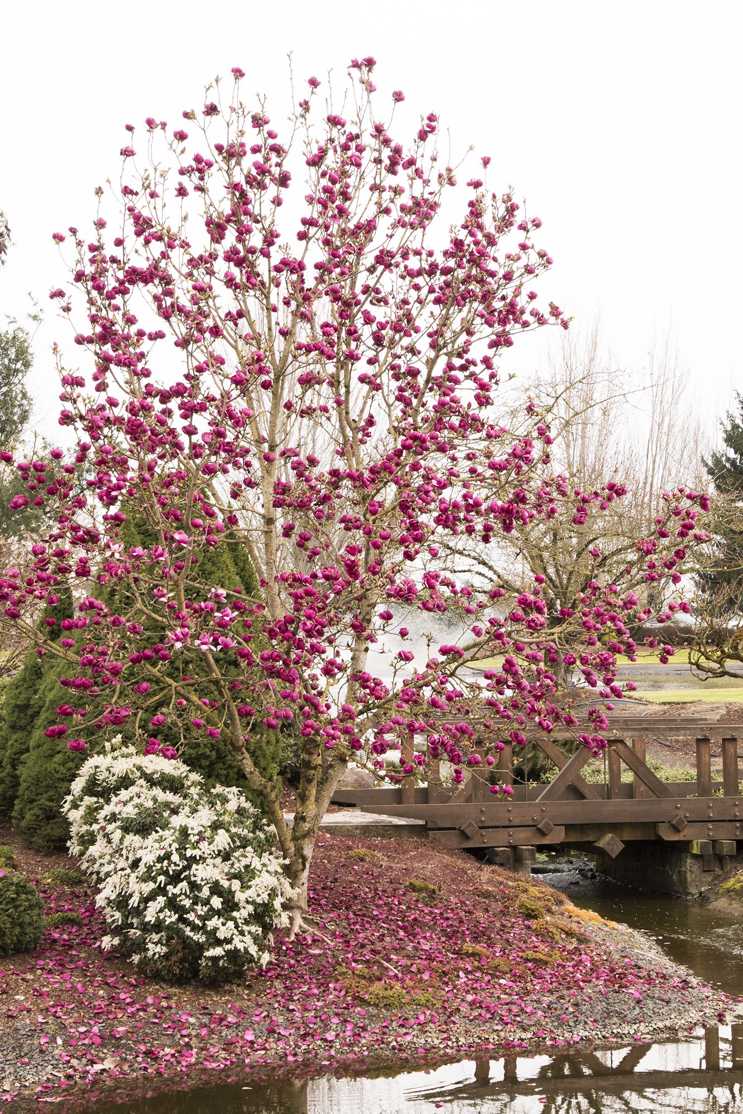 Small ornamental trees zone 6 - 6